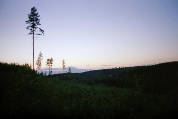 Pine Trees on the Horizon. A